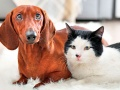 Diabetes en perros y gatos